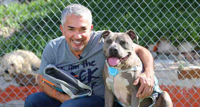 Picture of Cesar With Dog Wearing Weight Backpack