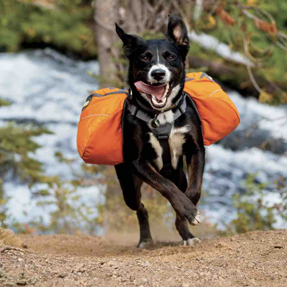 Picture of the Ruffwear Approach Dog Weight Vest